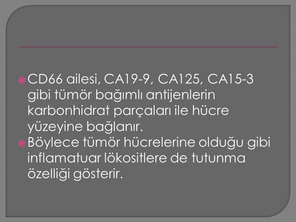  CD66 ailesi, CA19-9, CA125, CA15-3 gibi tümör bağımlı antijenlerin karbonhidrat parçaları ile hücre yüzeyine bağlanır.  Böylece tümör hücrelerine o