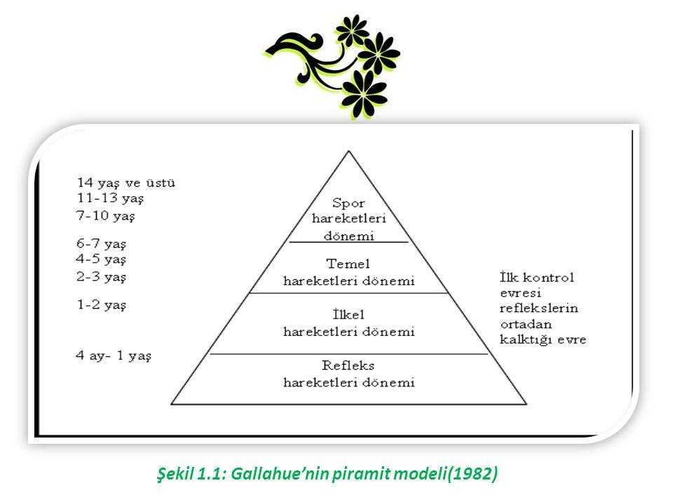 Şekil 1.1: Gallahue'nin piramit modeli(1982)