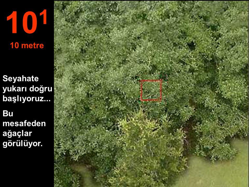 Seyahate yukarı doğru başlıyoruz... Bu mesafeden ağaçlar görülüyor. 10 1 10 metre