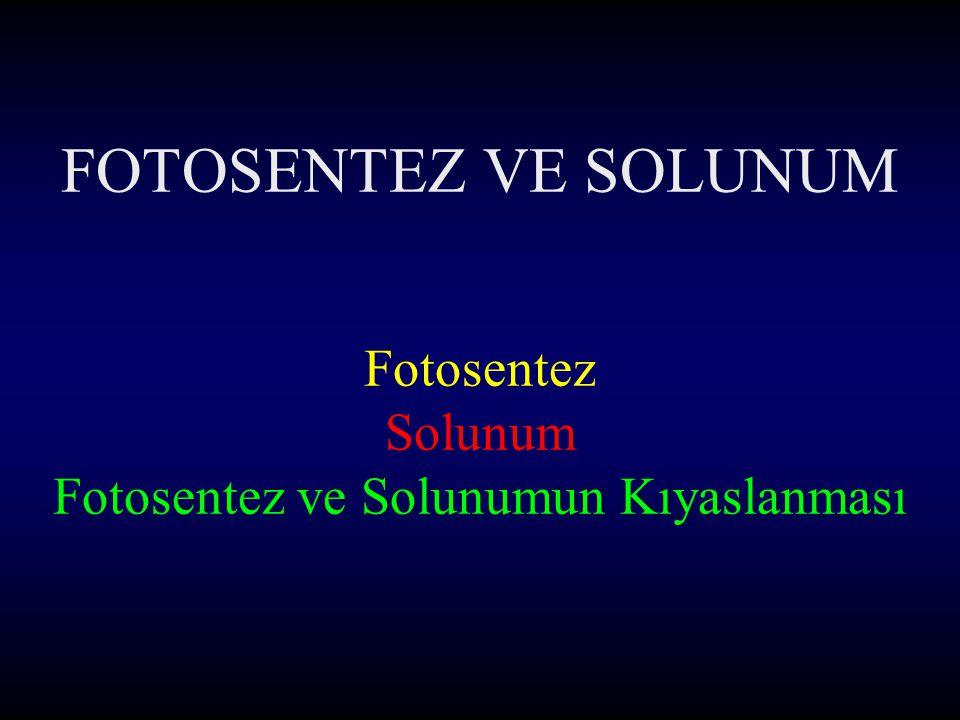 FOTOSENTEZ VE SOLUNUM Fotosentez Solunum Fotosentez ve Solunumun Kıyaslanması
