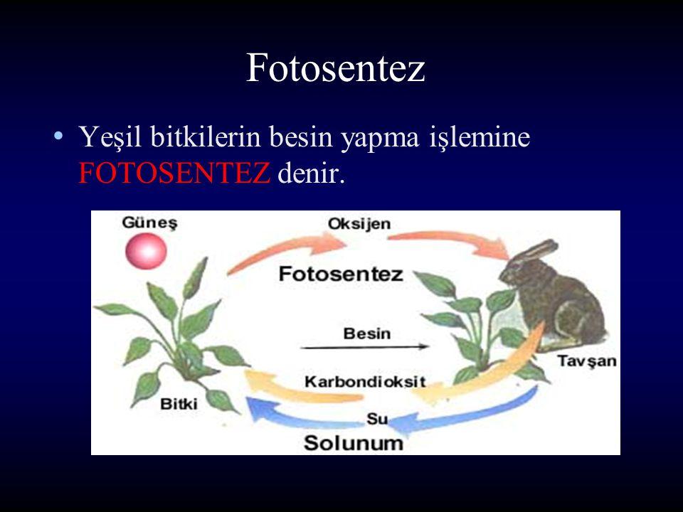 Fotosentez Fakat yeşil bitkiler kendi besinlerini kendileri yapar. Bundan dolayı yeşil bitkilere ÜRETİCİLER denir.