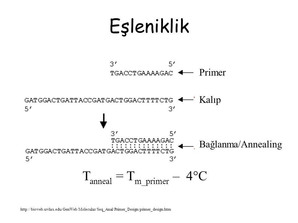 Saç Tokası Oluşumu http://bioweb.uwlax.edu/GenWeb/Molecular/Seq_Anal/Primer_Design/primer_design.htm