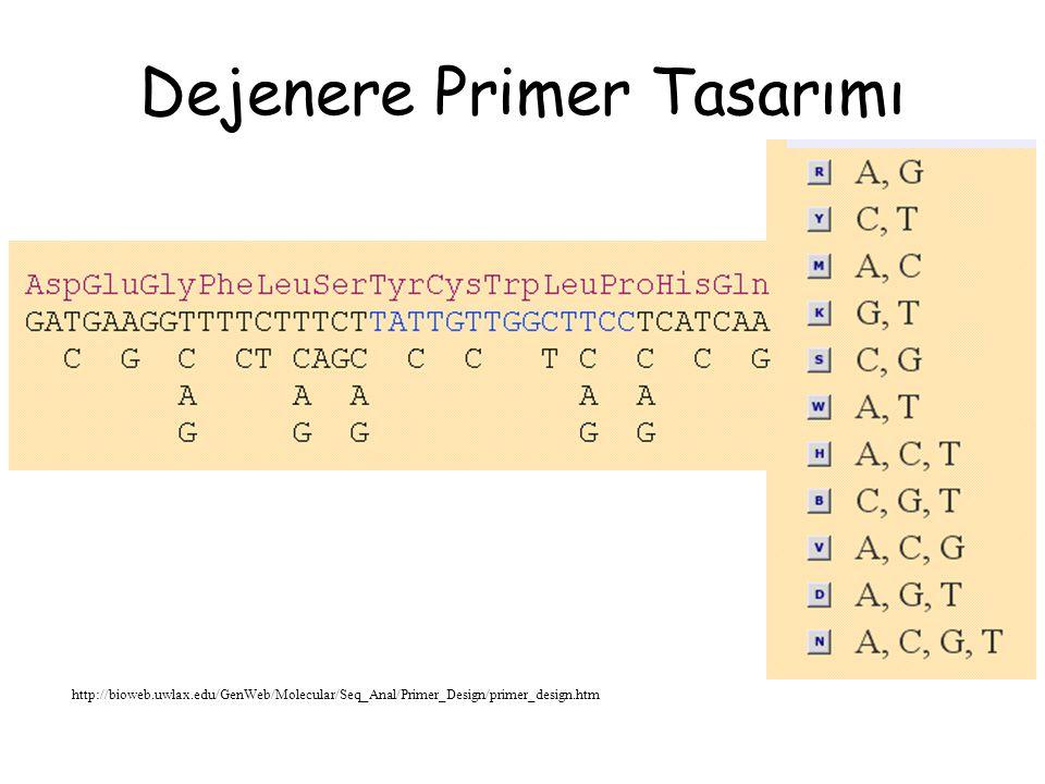 Primer Tasarımında Dikkat Edilmesi Gereken Özellikler Oligonükleotidin tek bir dizilime özgül olması gerekmektedir.