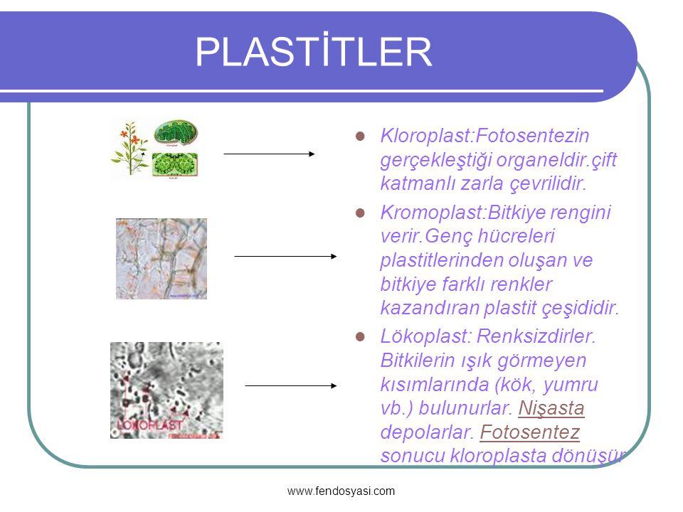 www.fendosyasi.com ORGANELLER Sentrozom:Sadece hayvan hücrelerinde bulunur.