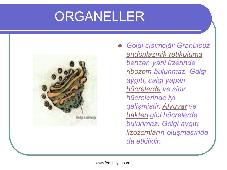 www.fendosyasi.com ORGANELER Endoplazmik Retikulum:Hücrede; hücre zarı ile çekirdek arasında madde taşıyan, ince kanalcıklara denir.1945 yılında PORTER elektron mikroskobu ile yaptığı çalışmalarda, hücre sitoplazmasının dantel şeklinde bir ağ manzarası görünümünde olduğunu saptamıştır.