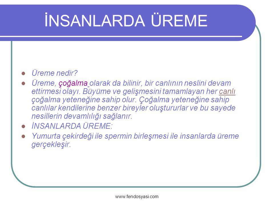 www.fendosyasi.com FARKLILIKLAR Hayvan ve bitki hücrelerinin arasındaki farklılıklar: Bitki hücrelerinde plastitler vardır, hayvan hücrelerinde yoktur.