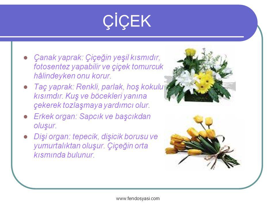 www.fendosyasi.com ÇİÇEKLERDE ÜREME,BÜYÜME ve GELİŞME Çiçek nasıldır,kaç bölüme ayrılır.