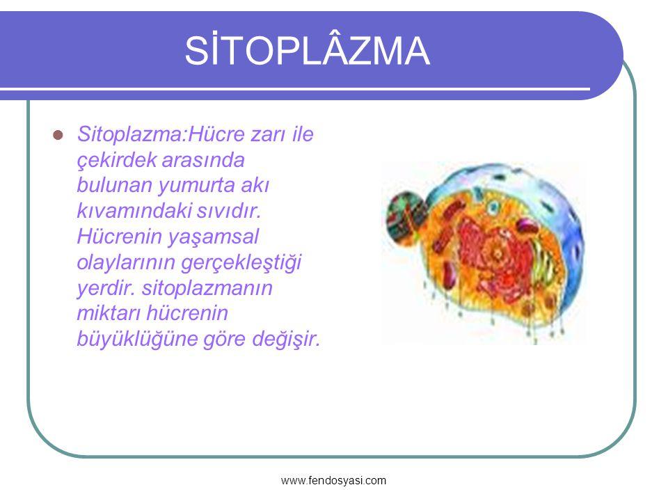 www.fendosyasi.com SİTOPLÂZMA Sitoplazma:Hücre zarı ile çekirdek arasında bulunan yumurta akı kıvamındaki sıvıdır.