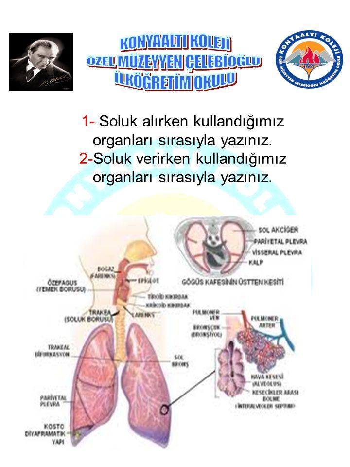 1- Soluk alırken kullandığımız organları sırasıyla yazınız. 2-Soluk verirken kullandığımız organları sırasıyla yazınız.