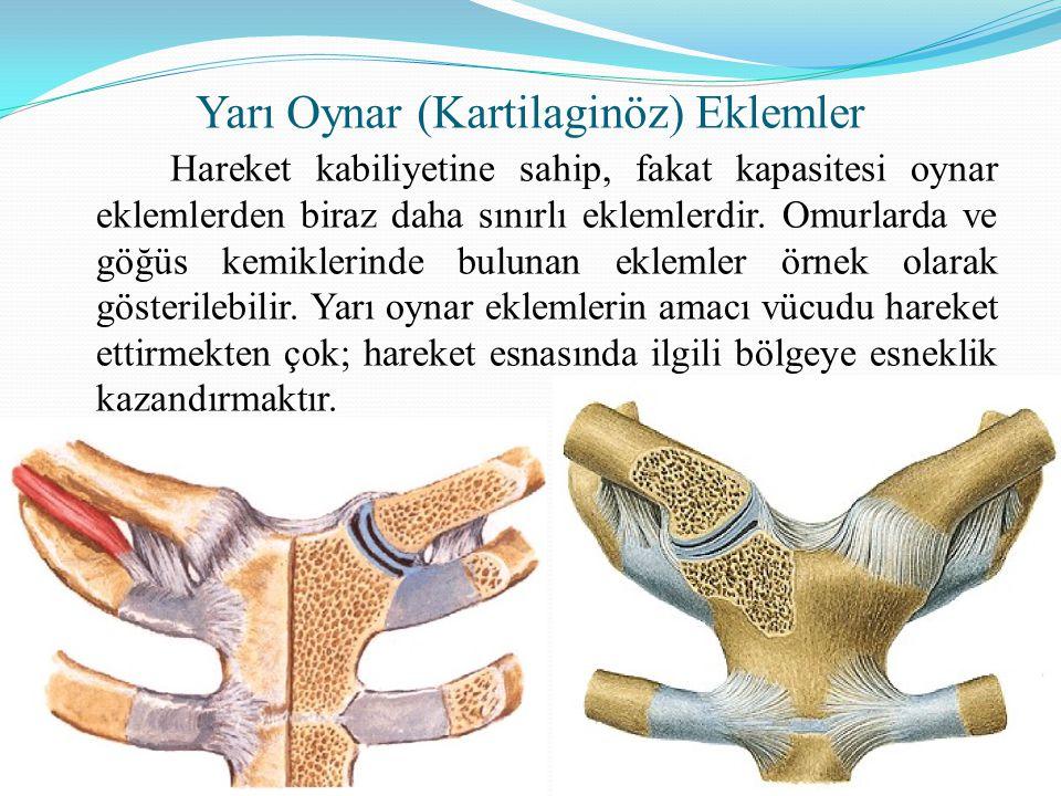 Oynamaz ( Fibröz ) Eklemler Hareket yeteneği olmayan, görevi birbirine bağladığı iki kemik arasındaki bağları sıkılaştırıp dayanıklılık kazandırmak olan eklemlerdir.