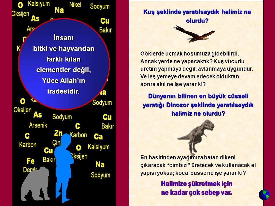"""Dünyanın bilinen en büyük cüsseli yaratığı Dinozor şeklinde yaratılsaydık halimiz ne olurdu? En basitinden ayağımıza batan dikeni çıkaracak """"cımbızı"""""""
