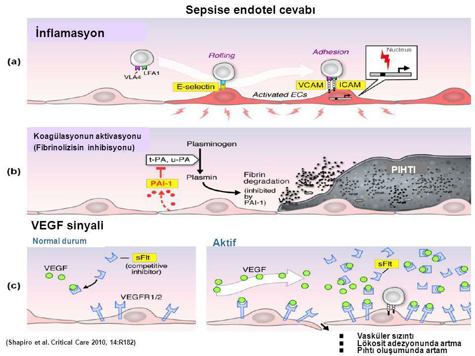 (Shapiro et al. Critical Care 2010, 14:R182) Sepsise endotel cevabı İnflamasyon Koagülasyonun aktivasyonu (Fibrinolizisin inhibisyonu) VEGF sinyali No