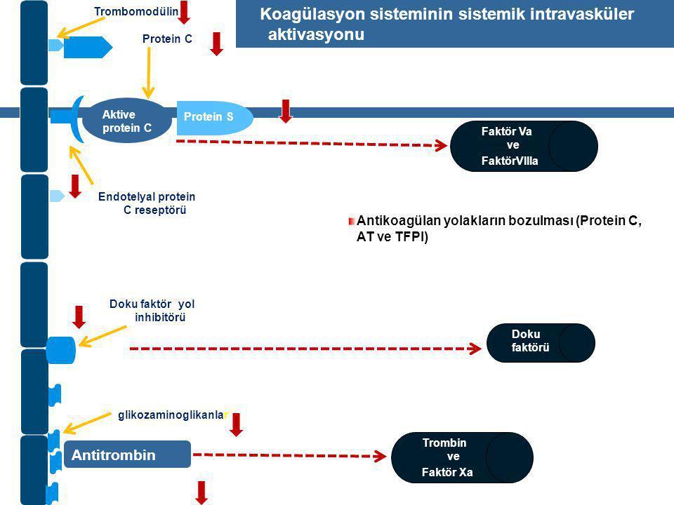 Aktive protein C Protein S Antitrombin Trombin ve Faktör Xa glikozaminoglikanlar Doku faktör yol inhibitörü Doku faktörü Faktör Va ve FaktörVIIIa Trombomodülin Endotelyal protein C reseptörü Protein C Koagülasyon sisteminin sistemik intravasküler aktivasyonu Antikoagülan yolakların bozulması (Protein C, AT ve TFPI)