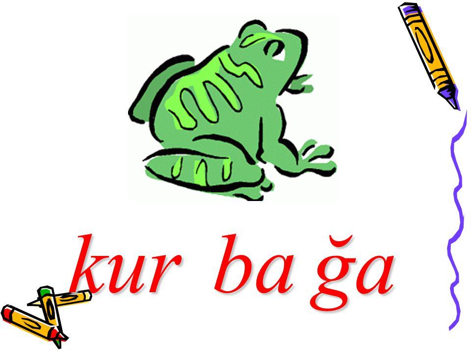 kurba ğa
