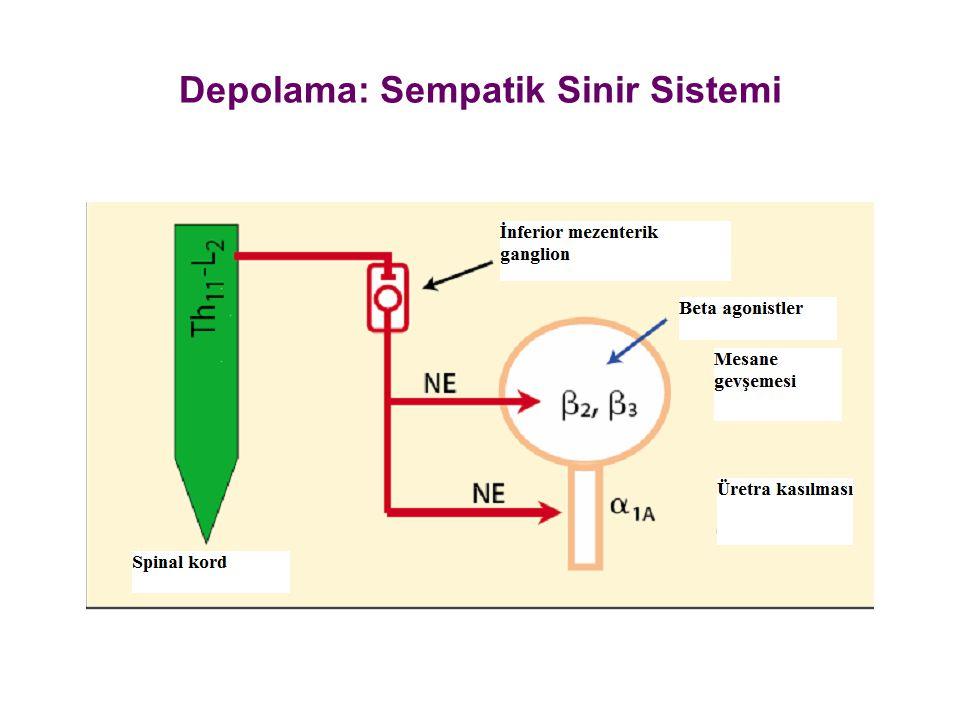 Depolama: Sempatik Sinir Sistemi