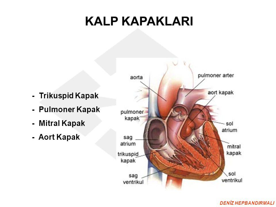 KALP KAPAKLARI - Trikuspid Kapak - Pulmoner Kapak - Mitral Kapak - Aort Kapak DENİZ HEPBANDIRMALI