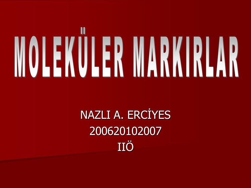 NAZLI A. ERCİYES 200620102007IIÖ