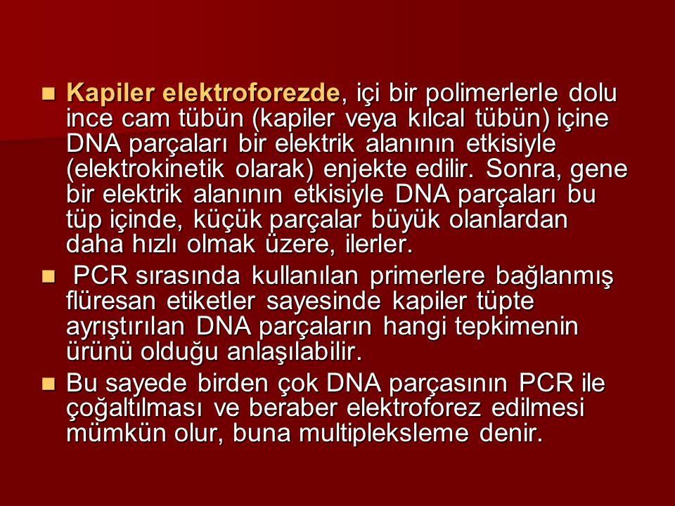 Kapiler elektroforezde, içi bir polimerlerle dolu ince cam tübün (kapiler veya kılcal tübün) içine DNA parçaları bir elektrik alanının etkisiyle (elek
