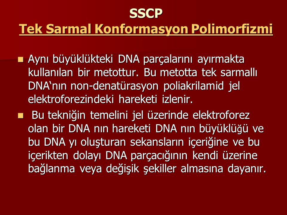 SSCP Tek Sarmal Konformasyon Polimorfizmi Aynı büyüklükteki DNA parçalarını ayırmakta kullanılan bir metottur. Bu metotta tek sarmallı DNA'nın non-den