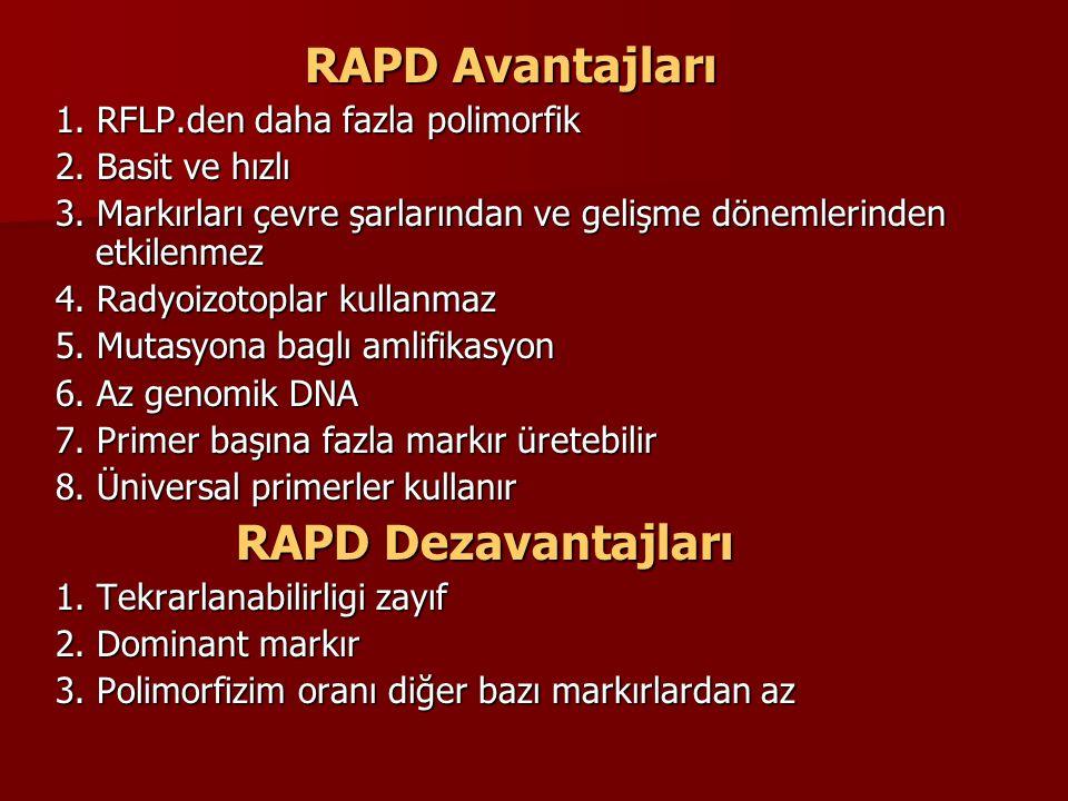 RAPD Avantajları RAPD Avantajları 1. RFLP.den daha fazla polimorfik 2. Basit ve hızlı 3. Markırları çevre şarlarından ve gelişme dönemlerinden etkilen