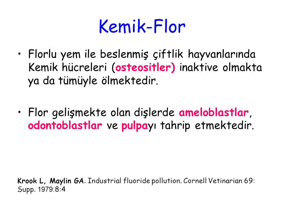 Krook L, Maylin GA. Industrial fluoride pollution. Cornell Vetinarian 69: Supp. 1979: 8:4 Florlu yem ile beslenmiş çiftlik hayvanlarında Kemik hücrele