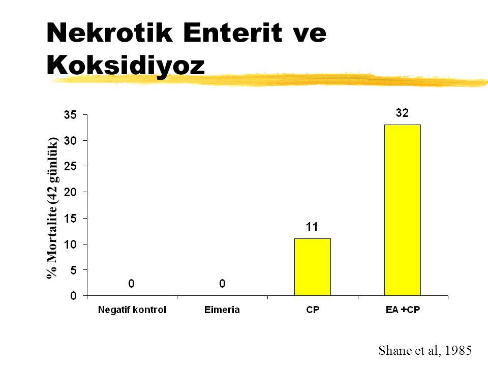 Nekrotik Enterit ve Koksidiyoz Shane et al, 1985 % Mortalite (42 günlük)
