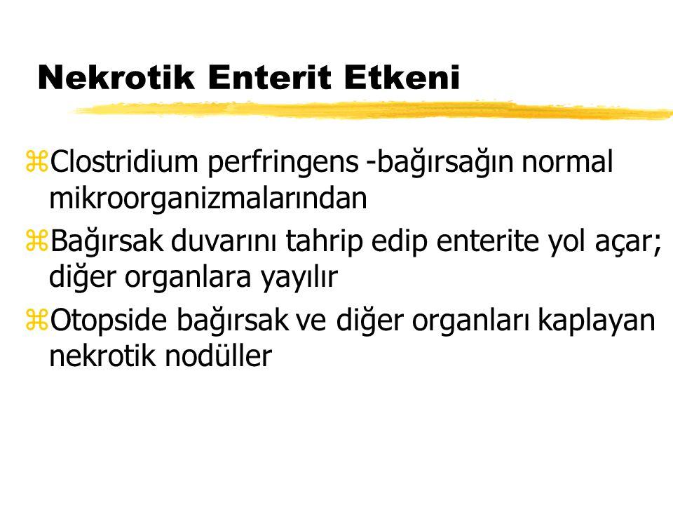 Nekrotik Enterit Etkeni zClostridium perfringens -bağırsağın normal mikroorganizmalarından zBağırsak duvarını tahrip edip enterite yol açar; diğer org