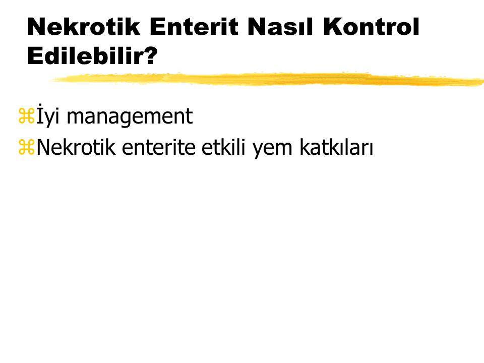 Nekrotik Enterit Nasıl Kontrol Edilebilir? zİyi management zNekrotik enterite etkili yem katkıları