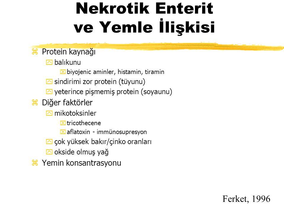 Nekrotik Enterit ve Yemle İlişkisi zProtein kaynağı ybalıkunu xbiyojenic aminler, histamin, tiramin ysindirimi zor protein (tüyunu) yyeterince pişmemi