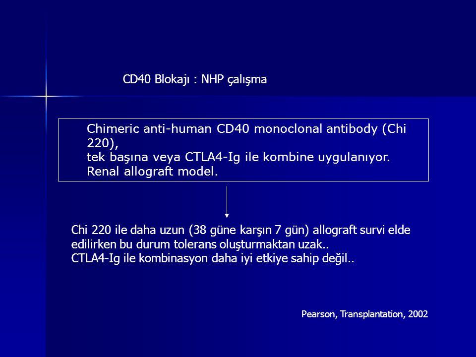 Chimeric anti-human CD40 monoclonal antibody (Chi 220), tek başına veya CTLA4-Ig ile kombine uygulanıyor. Renal allograft model. CD40 Blokajı : NHP ça