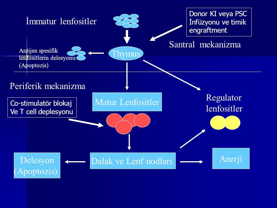 Thymus İmmatur lenfositler Antijen spesifik lenfositlerin delesyonu (Apoptozis) Santral mekanizma Regulator lenfositler Matur Lenfositler Dalak ve Len