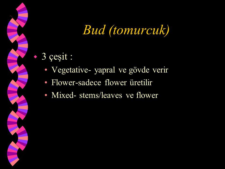 Bud (tomurcuk) w 3 çeşit : Vegetative- yapral ve gövde verir Flower-sadece flower üretilir Mixed- stems/leaves ve flower