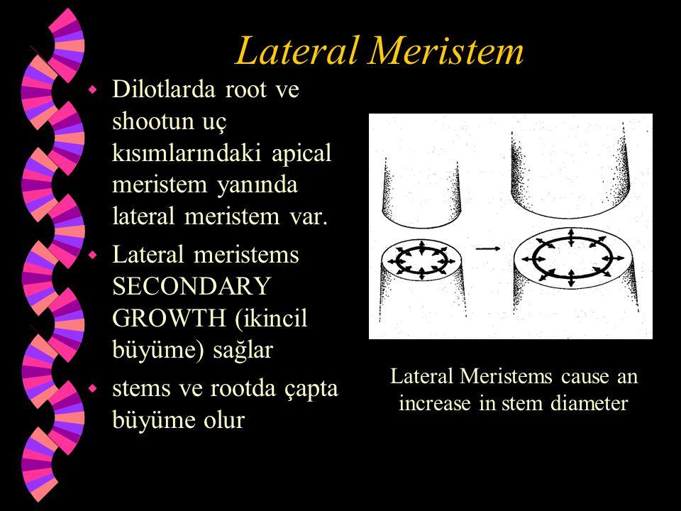 Lateral Meristem w Dilotlarda root ve shootun uç kısımlarındaki apical meristem yanında lateral meristem var. w Lateral meristems SECONDARY GROWTH (ik