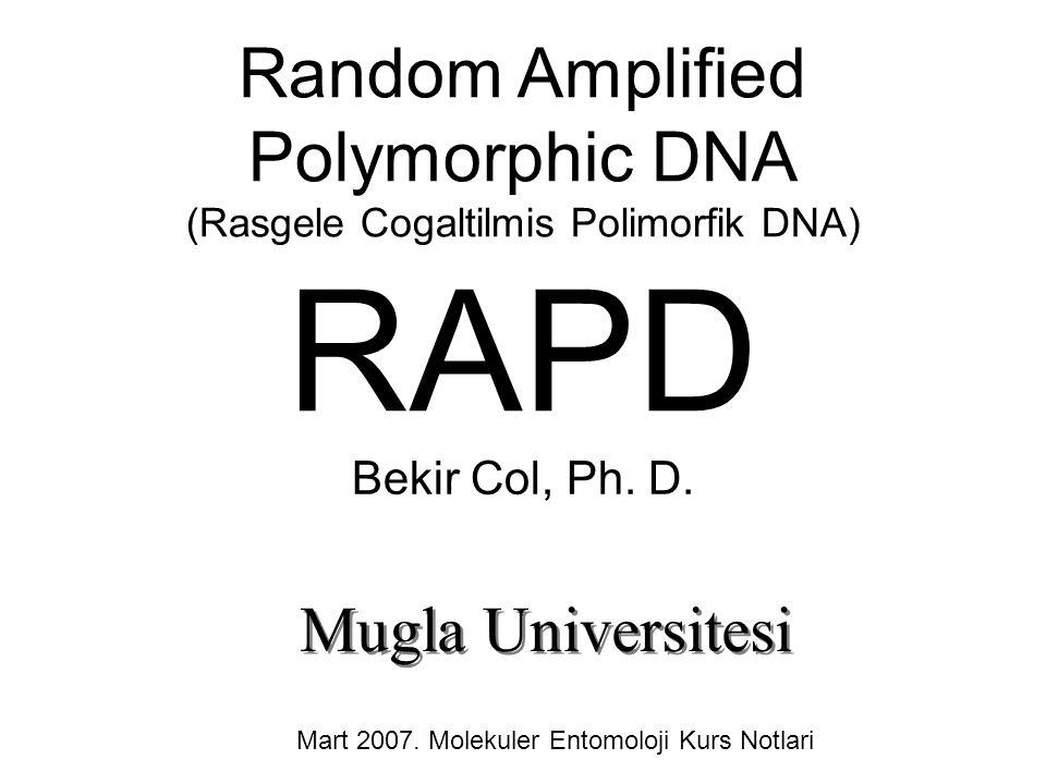 Random Amplified Polymorphic DNA (Rasgele Cogaltilmis Polimorfik DNA) RAPD Bekir Col, Ph. D. Mugla Universitesi Mart 2007. Molekuler Entomoloji Kurs N