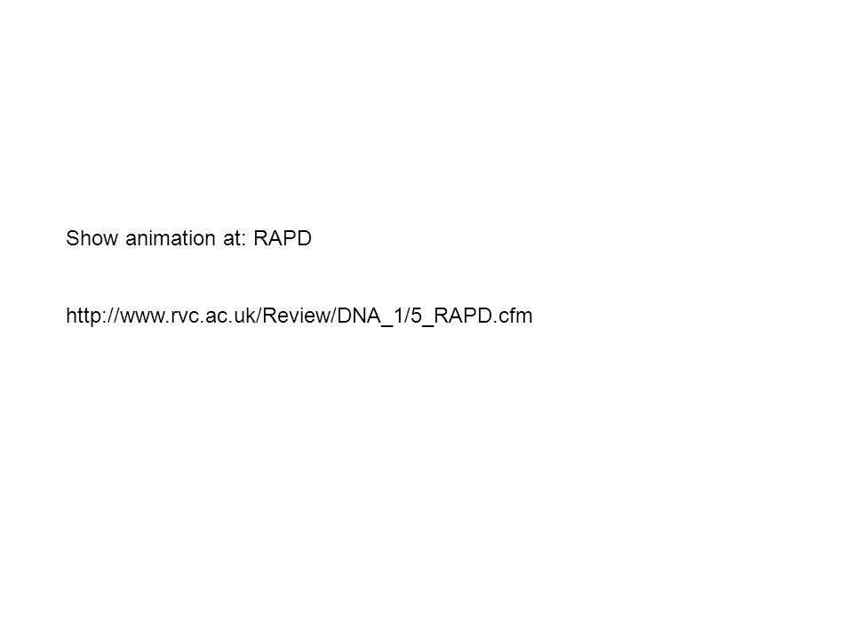 Show animation at: RAPD http://www.rvc.ac.uk/Review/DNA_1/5_RAPD.cfm