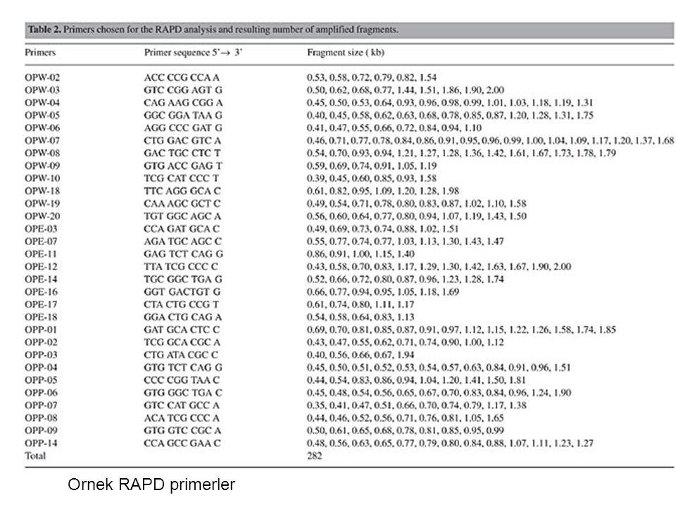 Ornek RAPD primerler