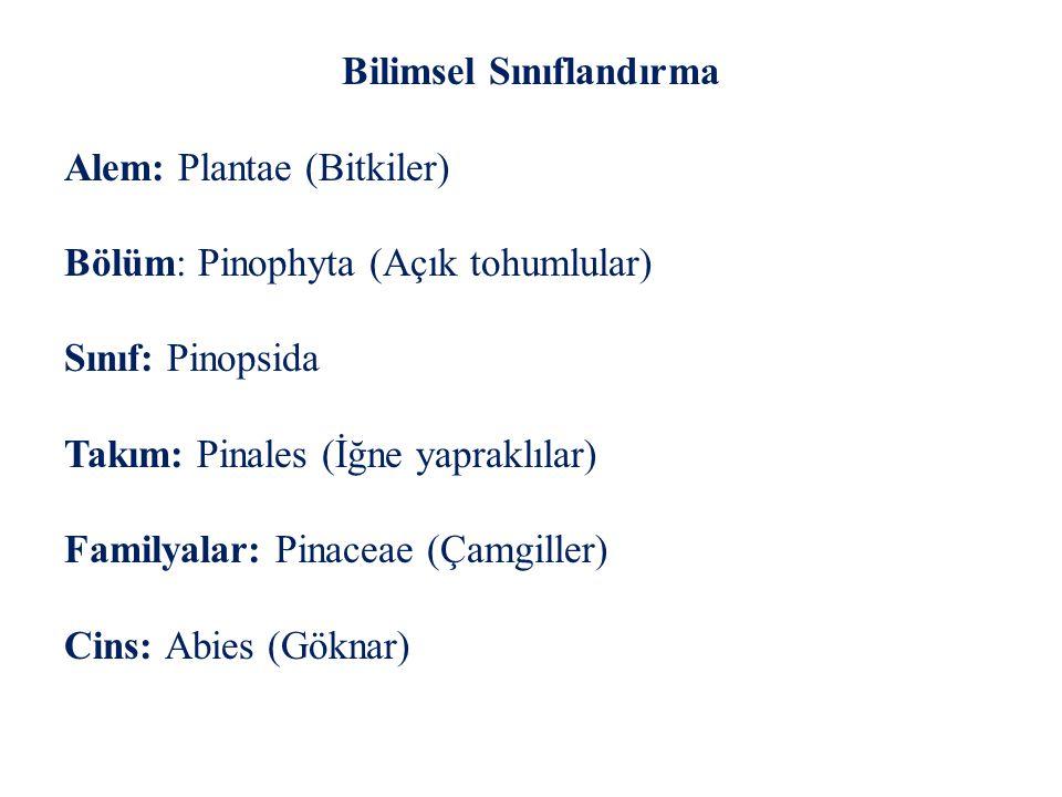 Bilimsel Sınıflandırma Alem: Plantae (Bitkiler) Bölüm: Pinophyta (Açık tohumlular) Sınıf: Pinopsida Takım: Pinales (İğne yapraklılar) Familyalar: Pina