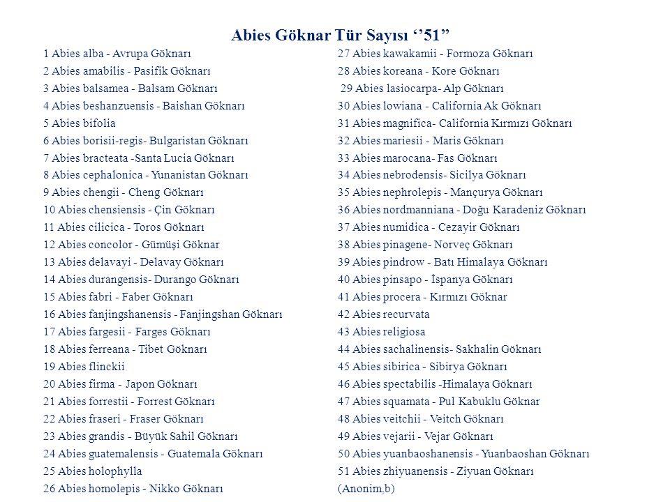 1)Abies alba cv. Pendula' 2) Abies alba cv. Pyramidalis' 3)Abies amabilis cv. Spreading Star' 4) Abies cephalonica cv. Meyer s Dwarf' 5) Abies concolor cv. Archer s Dwarf' 6) Abies concolor cv. Compacta' 7) Abies concolor cv. Violacea' 8) Abies concolor cv. Wintergold' 9) Abies delavayi cv. Green Giant' 10) Abies koreana cv. Aurea' 11) Abies koreana cv. Blauer Pfiff' 12) Abies koreana cv. Green Survival' 13) Abies koreana cv. Luminetta' 14) Abies koreana cv. Oberon' 15) Abies koreana cv. Prostrate Beauty 16) Abies koreana cv. Silberlocke' 17) Abies lasiocarpa cv. Compacta 18) Abies lasiocarpa cv. Green Globe 19) Abies nordmanniana cv. Golden Spreader 20) Abies nordmanniana cv. Pendula 21) Abies numidica cv. Pendula 22) Abies pinsapo cv. Aurea 23) Abies pinsapo cv. Glauca 24) Abies pinsapo cv. Horstmann 25) Abies pinsapo cv. Pendula 26) Abies procera cv. Blaue Hexe 27) Abies procera cv. Glauca (Anonim,b) Kültivarları