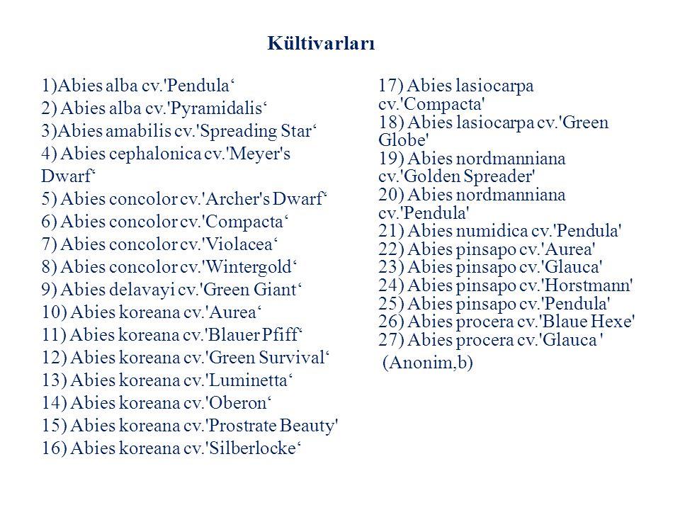 1)Abies alba cv.'Pendula' 2) Abies alba cv.'Pyramidalis' 3)Abies amabilis cv.'Spreading Star' 4) Abies cephalonica cv.'Meyer's Dwarf' 5) Abies concolo