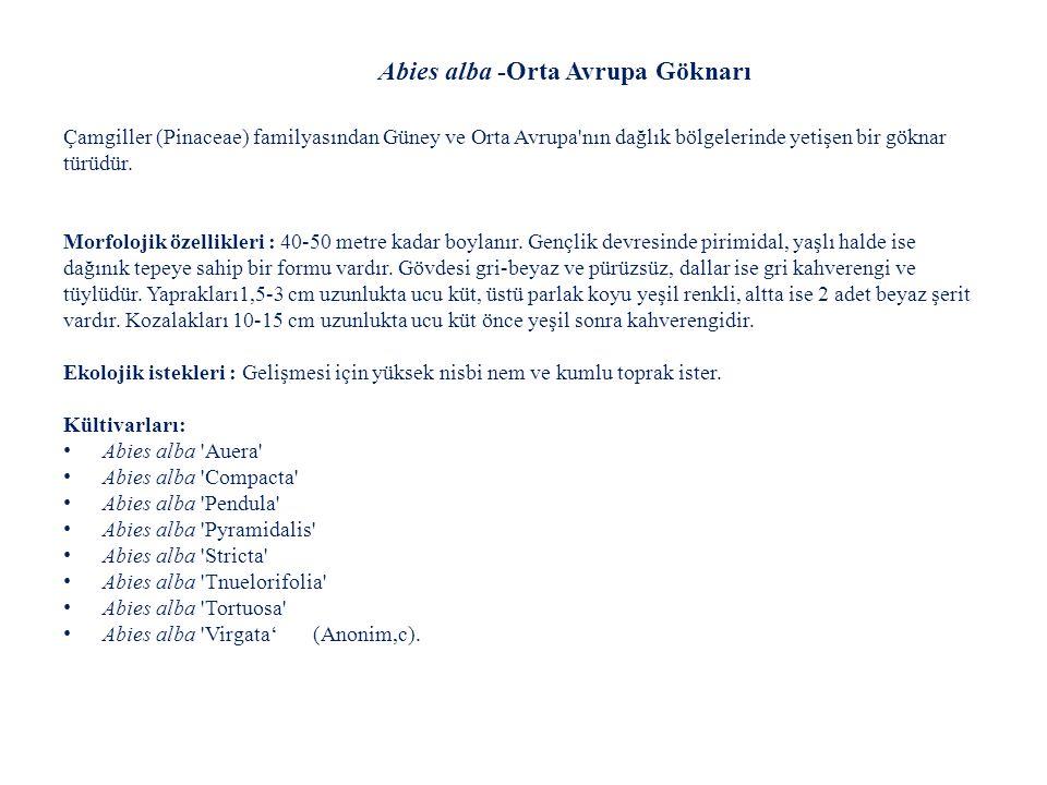 Abies lasiocarpa-Alp Göknarı Kültivarları: Abies lasiocarpa cv. Compacta Abies lasiocarpa cv. Green Globe