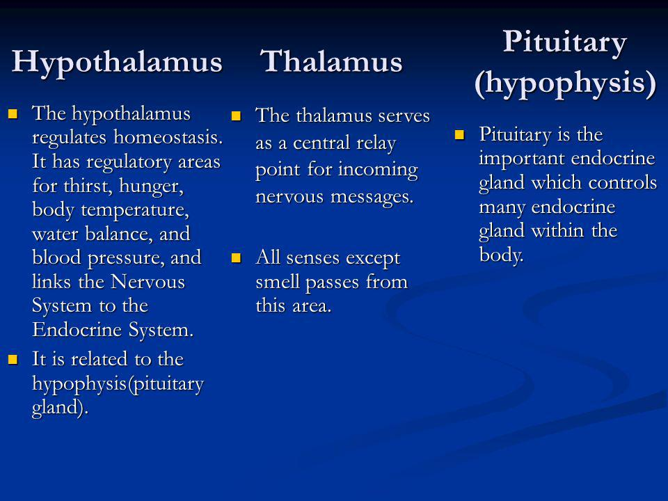 Hypothalamus The hypothalamus regulates homeostasis. It has regulatory areas for thirst, hunger, body temperature, water balance, and blood pressure,