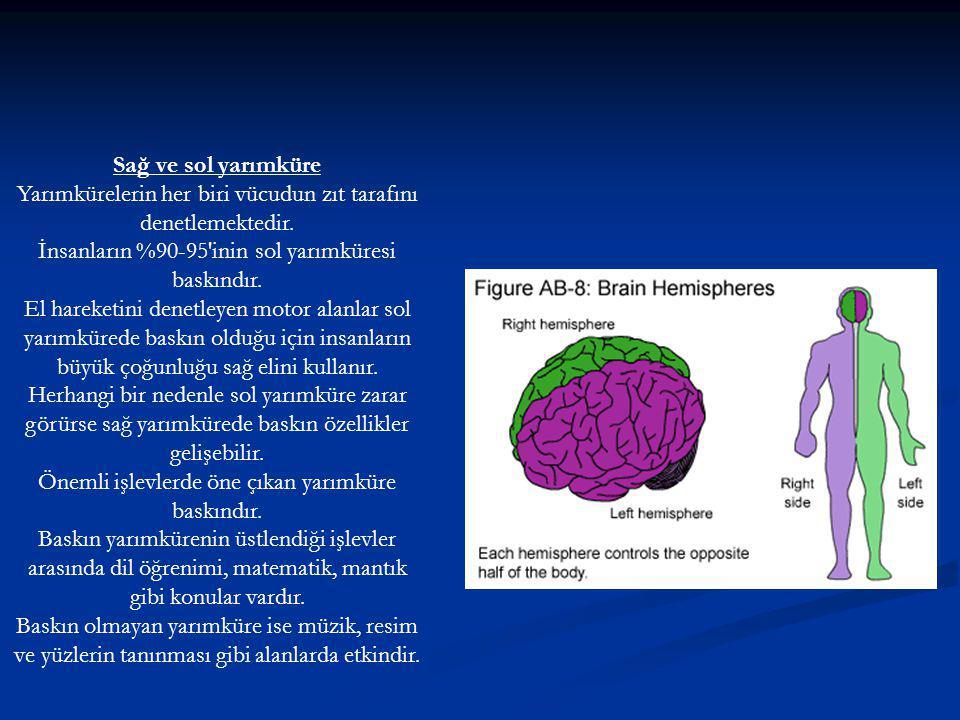 Sağ ve sol yarımküre Yarımkürelerin her biri vücudun zıt tarafını denetlemektedir.