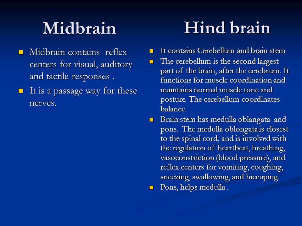 Midbrain Midbrain contains reflex centers for visual, auditory and tactile responses. Midbrain contains reflex centers for visual, auditory and tactil