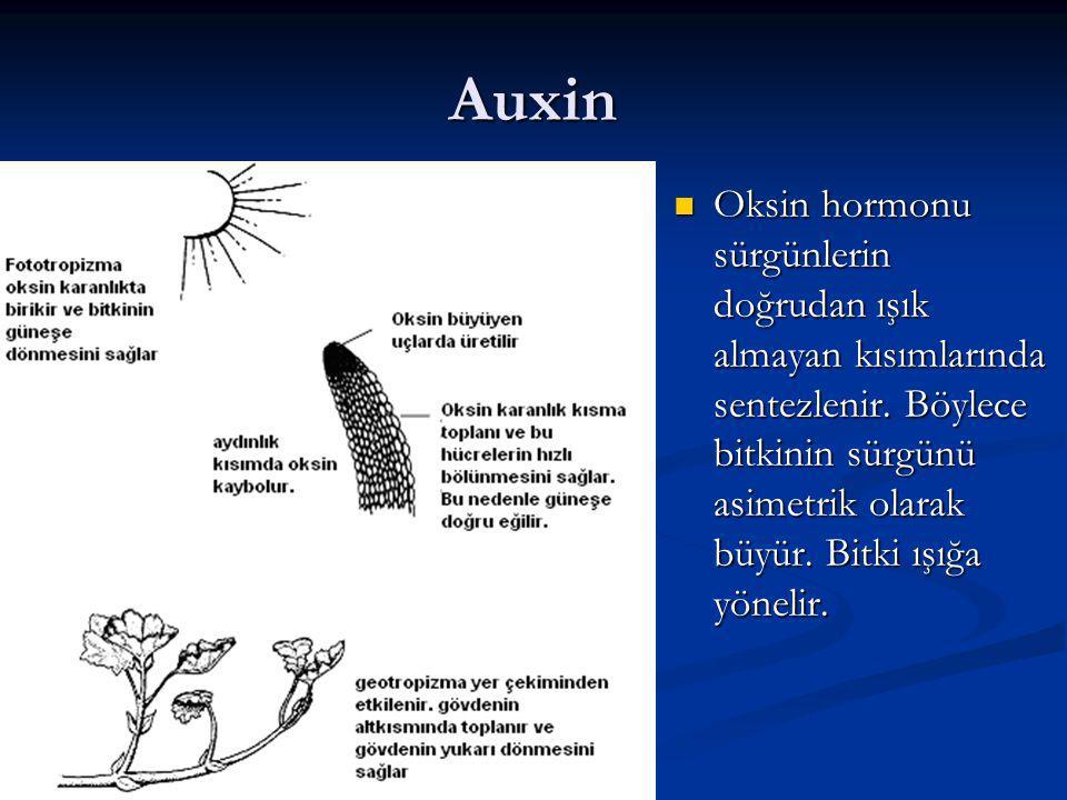 Auxin Oksin hormonu sürgünlerin doğrudan ışık almayan kısımlarında sentezlenir.