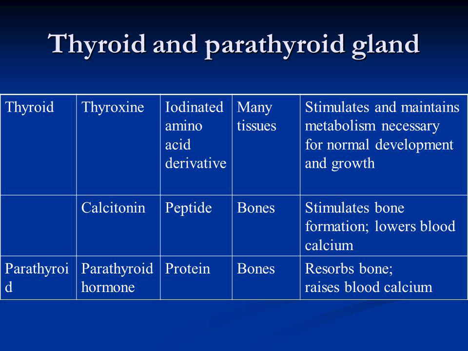 Thyroid and parathyroid gland ThyroidThyroxineIodinated amino acid derivative Many tissues Stimulates and maintains metabolism necessary for normal de