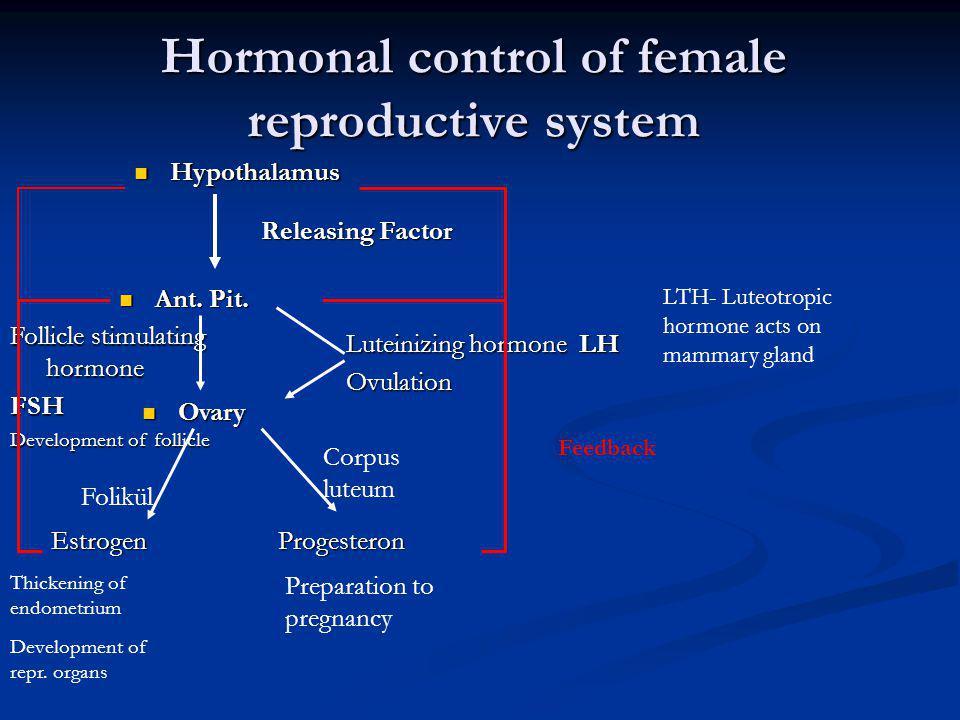 Hormonal control of female reproductive system Hypothalamus Hypothalamus Ant.