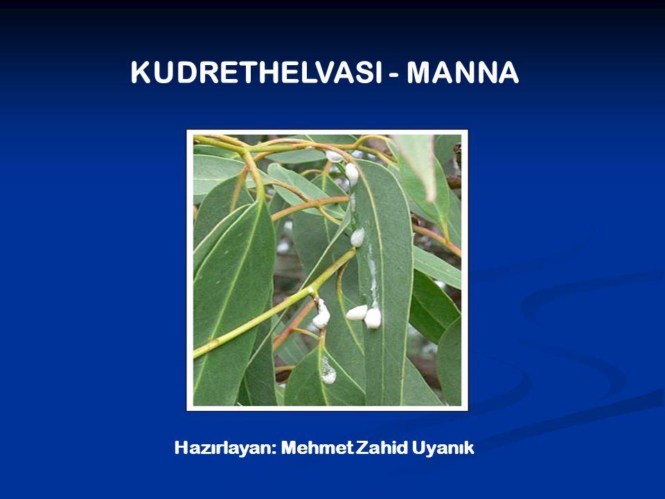 KUDRETHELVASI - MANNA Hazırlayan: Mehmet Zahid Uyanık