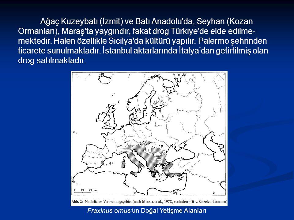 Ağaç Kuzeybatı (İzmit) ve Batı Anadolu da, Seyhan (Kozan Ormanları), Maraş ta yaygındır, fakat drog Türkiye de elde edilme- mektedir.