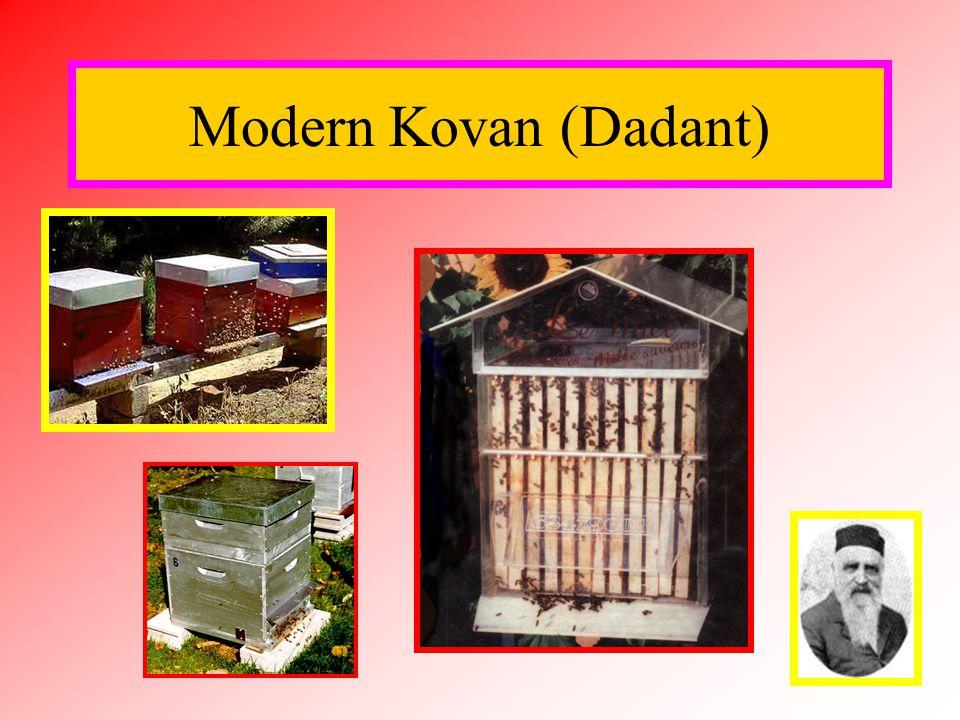 Modern Kovan (Dadant)