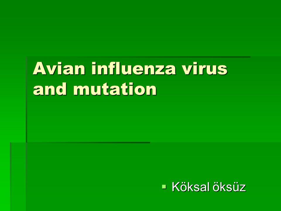 Avian influenza virus and mutation  Köksal öksüz